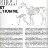 Le cheval et l'homme - page 2