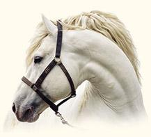 cheval_tete2