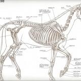 Le squelette de profil