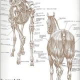 Le squelette face postérieure